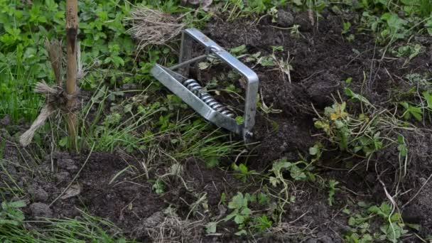 Zahradník pracovník ruku vyndat podzemní pasti s mrtvý krtek