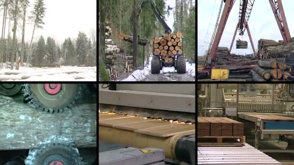Tree cut in forest. Parquet board production. video clip collage