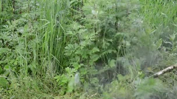 closeup muž s sekačky mow trim plevel na po dešti