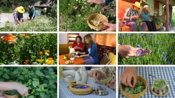 Women gather herbs and drink healthy tea. Footage clips collage.