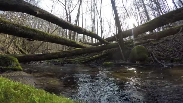 průtok vody divoký potok a mechem padlé stromy. 4k