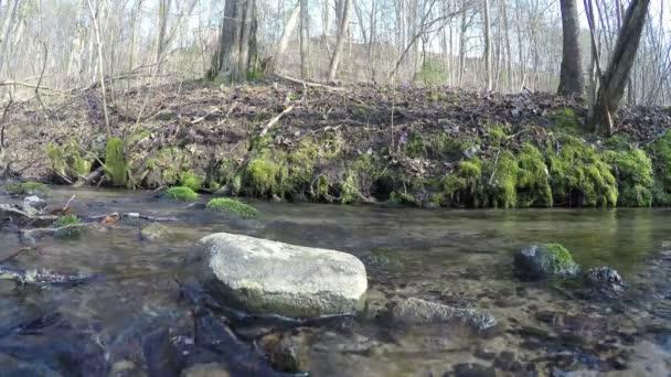 divoký potok vody toku a modrá podléška květiny. 4k