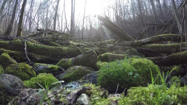 mech na kámen a strom kmeny poblíž divoký potok vodního toku. 4k
