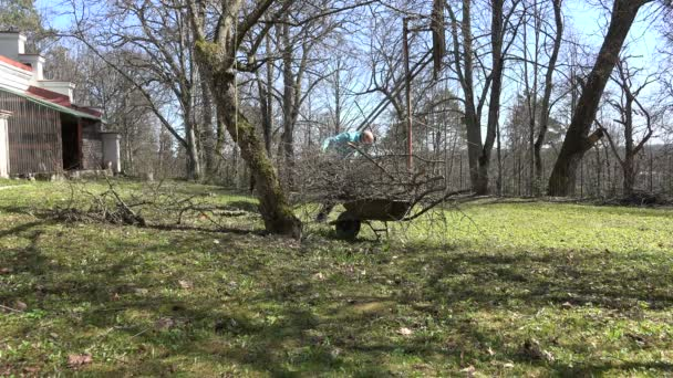 Farmer man load barrow with fruit tree branches and carry. 4K