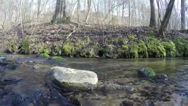 divoký potok vody toku a modrá podléška květiny na břeh. 4k