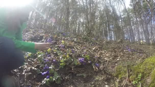 Woman in green coat pick violet flower blooms in spring. 4K