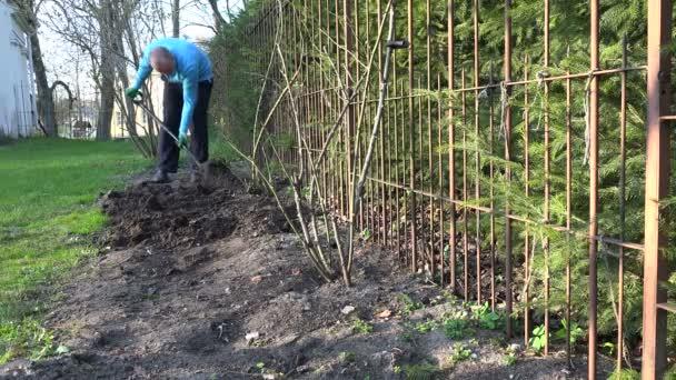 Чоловічий садівник копати квітка ліжко грунту землі біля паростки з  троянди. 4 к — стокове 4f3efa5182d56