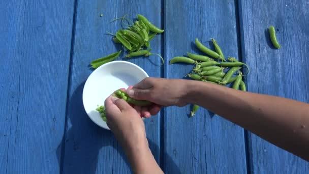 Girl hands husk pod green peas in white dish on blue wooden table. 4K