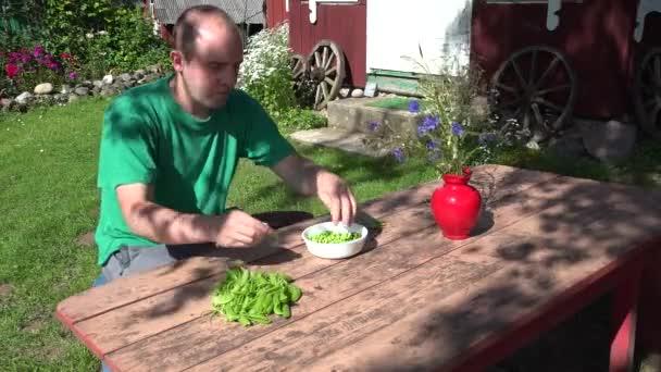 gardener man guy husk hull and eat fresh peas. 4K