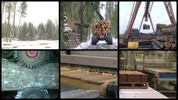 Dřevo a dřevařský průmysl. MONTAGE stopek koláže.