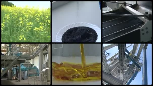 Rape plant seed oil biofuel production. Clip collage.