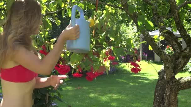 Blond gardener woman with watering can water flower pots hanging on fruit tree in summer garden. 4K