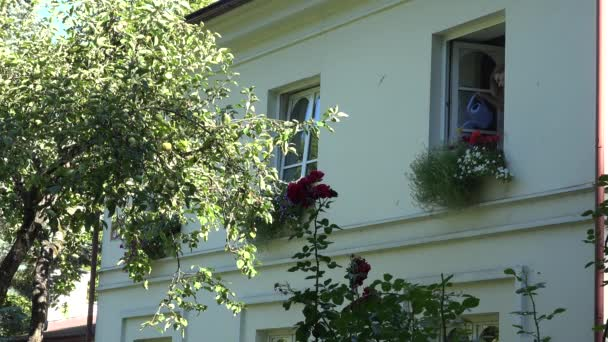 Mädchen Bewässerung Blumen Pflanzen auf der Fensterbank im Obergeschoss des Hauses. 4k