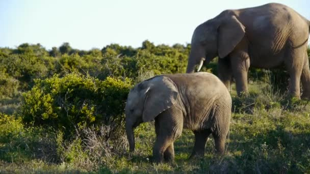 family of africa elephants in south africa