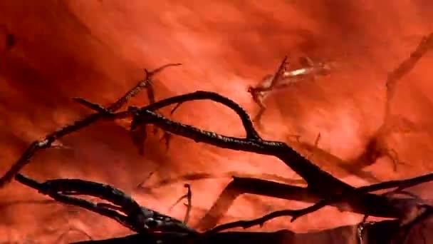 hořící bush ohně s red hot flames
