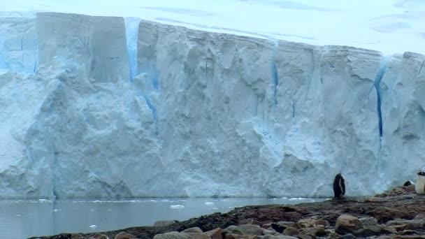 pinguino in Antartide davanti a un enorme ghiacciaio