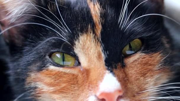 Kočka otevře a zavře oči. Ospalá kočka. Zvíře. Mazlíček u okna. Šťastný mazlíček.