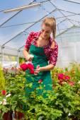 Ženské zahradníka v zelinářství nebo školky
