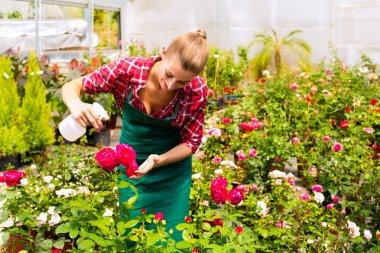 Female florist or gardener in flower shop or nursery with roses stock vector