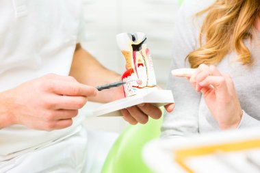 Dentist explaining patient therapy on model tooth