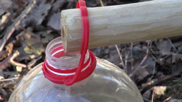 Mízy kape v plastové láhvi
