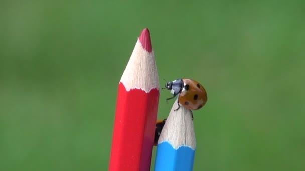 krásné hmyzí štěstí symbolu berušky Beruška na umělce barevné tužky