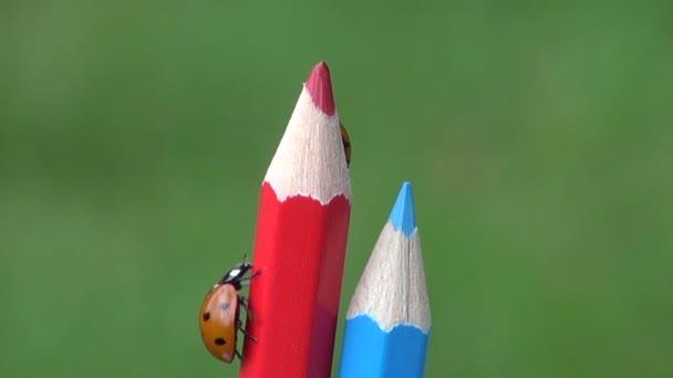 Coccinella di simbolo di due bella fortuna sulla matita colorata artista