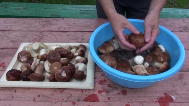 Připravuje čerstvé houby cep Hřib na stole