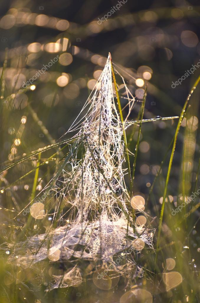 blur dewy summer meadow grass with spiderweb background