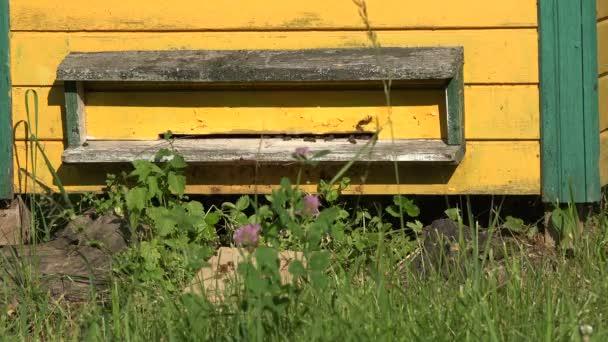 Včely práci v úlu na slunečný letní den, 4k