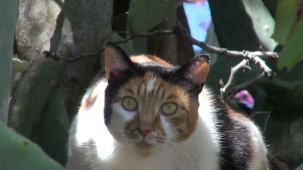 Macska ül a kaktusz opuntia bush