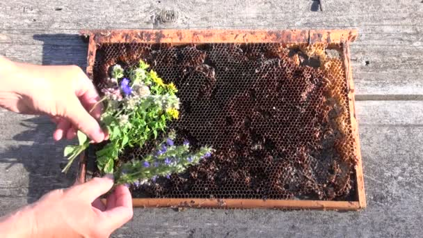 Hand placing various herbs on honeycomb