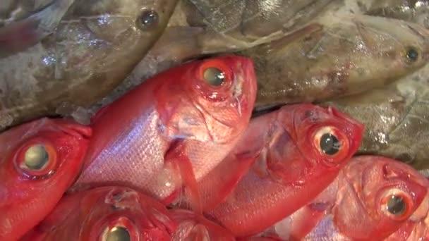 Frissen fogott tengeri hal a piacon