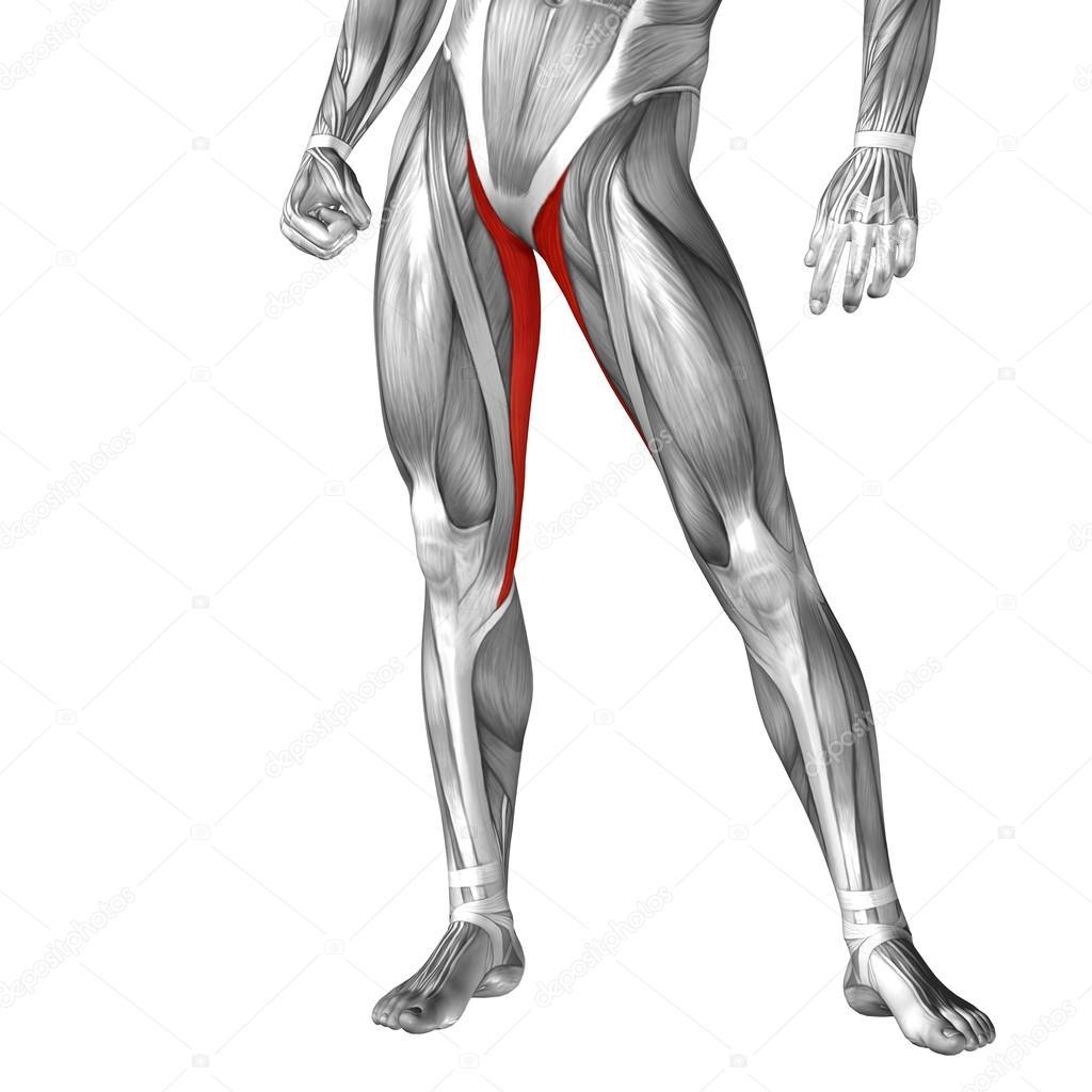 Anatomie der menschlichen Beine — Stockfoto © design36 #100323472