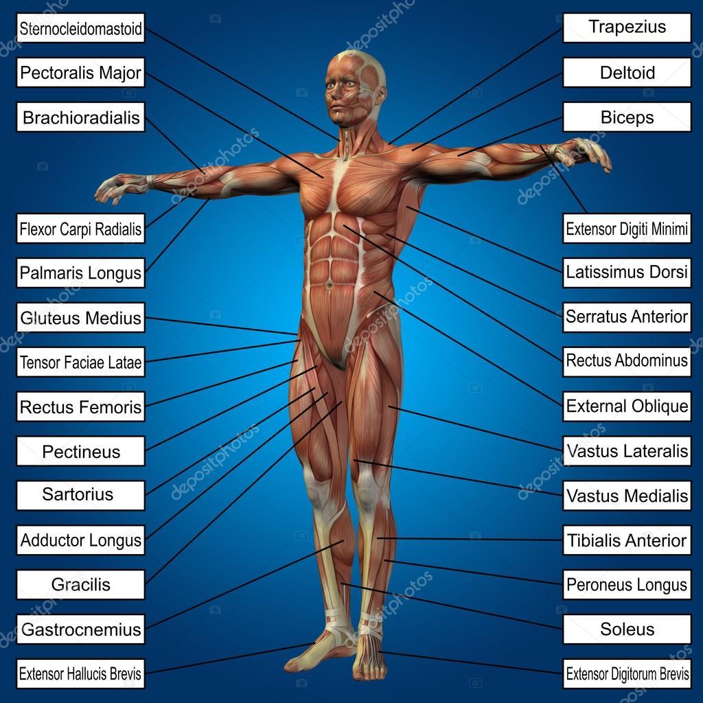 hombre con músculos y texto — Foto de stock © design36 #100323572