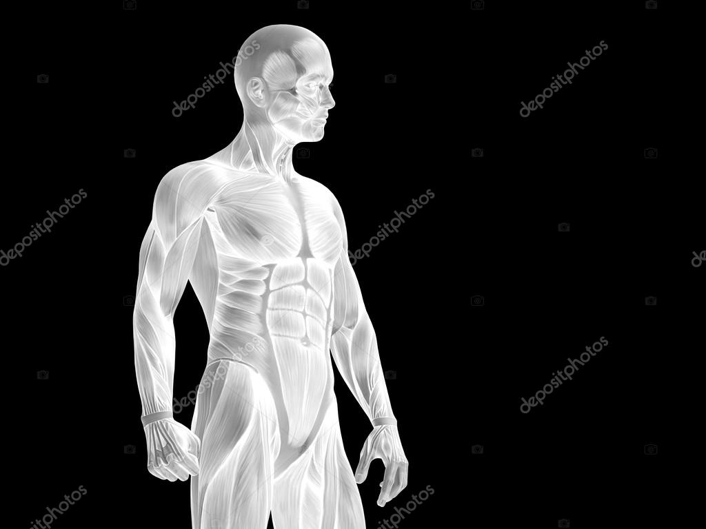 Anatomy Upper Body With Muscles Stock Photo Design36 100324638