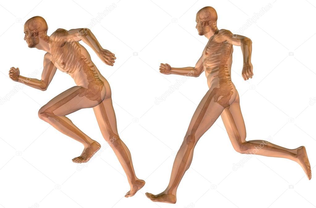 hombres con músculos para diseños de anatomía — Fotos de Stock ...