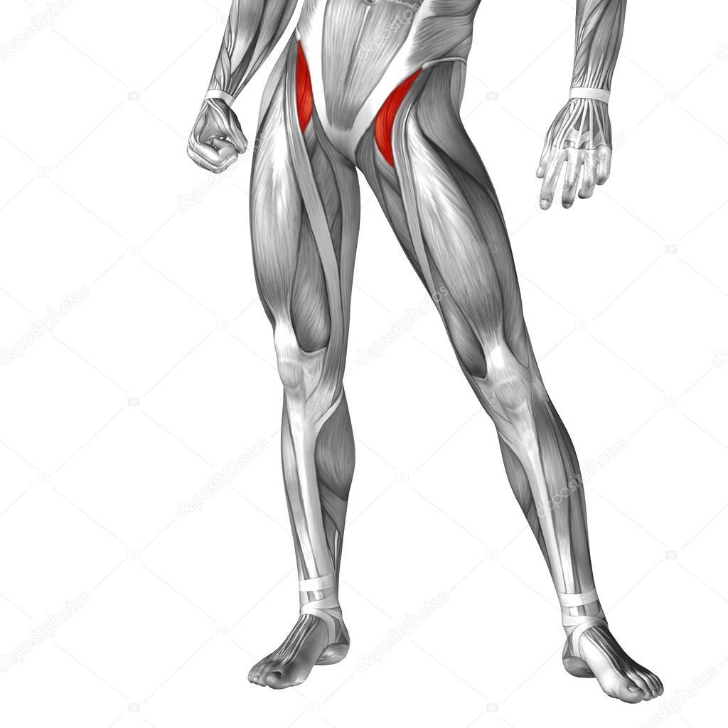 Anatomie der menschlichen Beine — Stockfoto © design36 #100325718