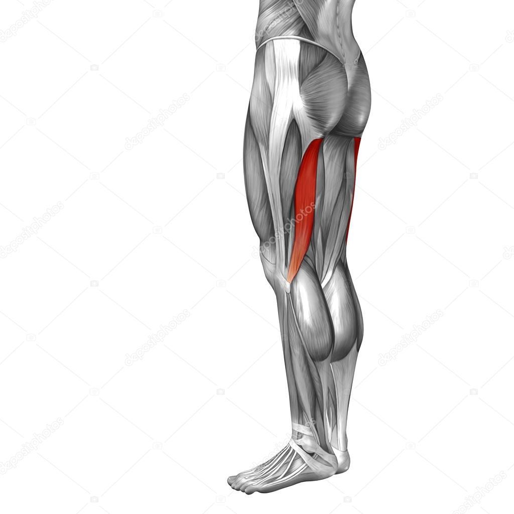 Anatomie der menschlichen Beine — Stockfoto © design36 #100325884