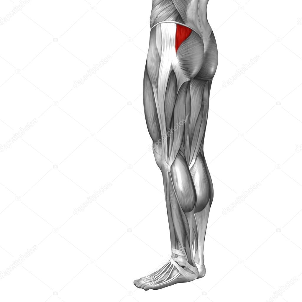 Anatomie der menschlichen Beine — Stockfoto © design36 #100327000