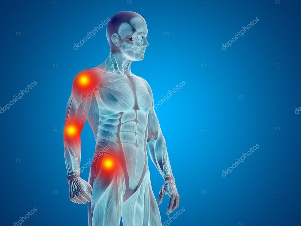 human man anatomy body — Stock Photo © design36 #100534366