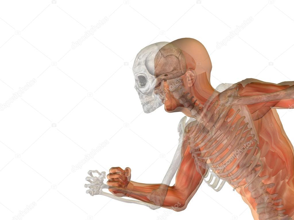 Anatomie des Menschen männlich — Stockfoto © design36 #100535688