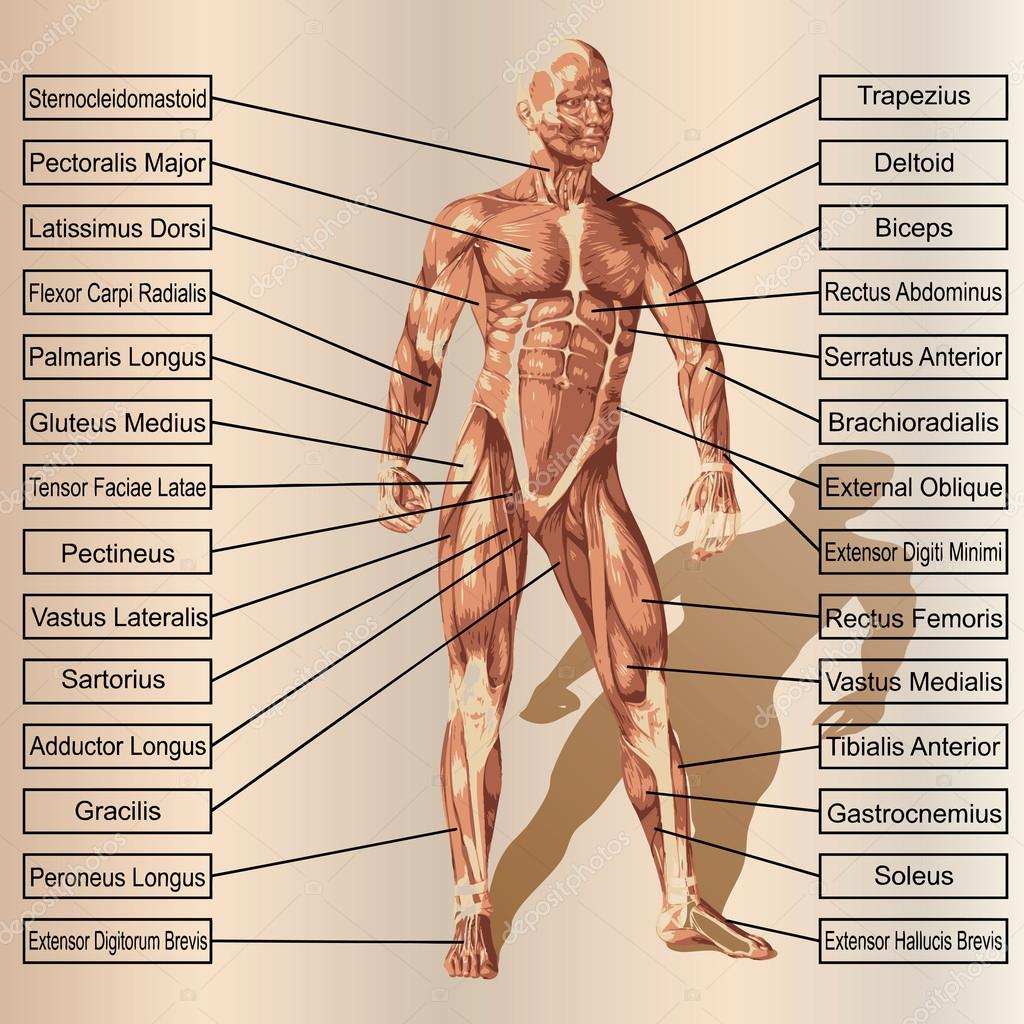 Konzept oder konzeptionelle 3D-Mann oder die menschliche Anatomie ...