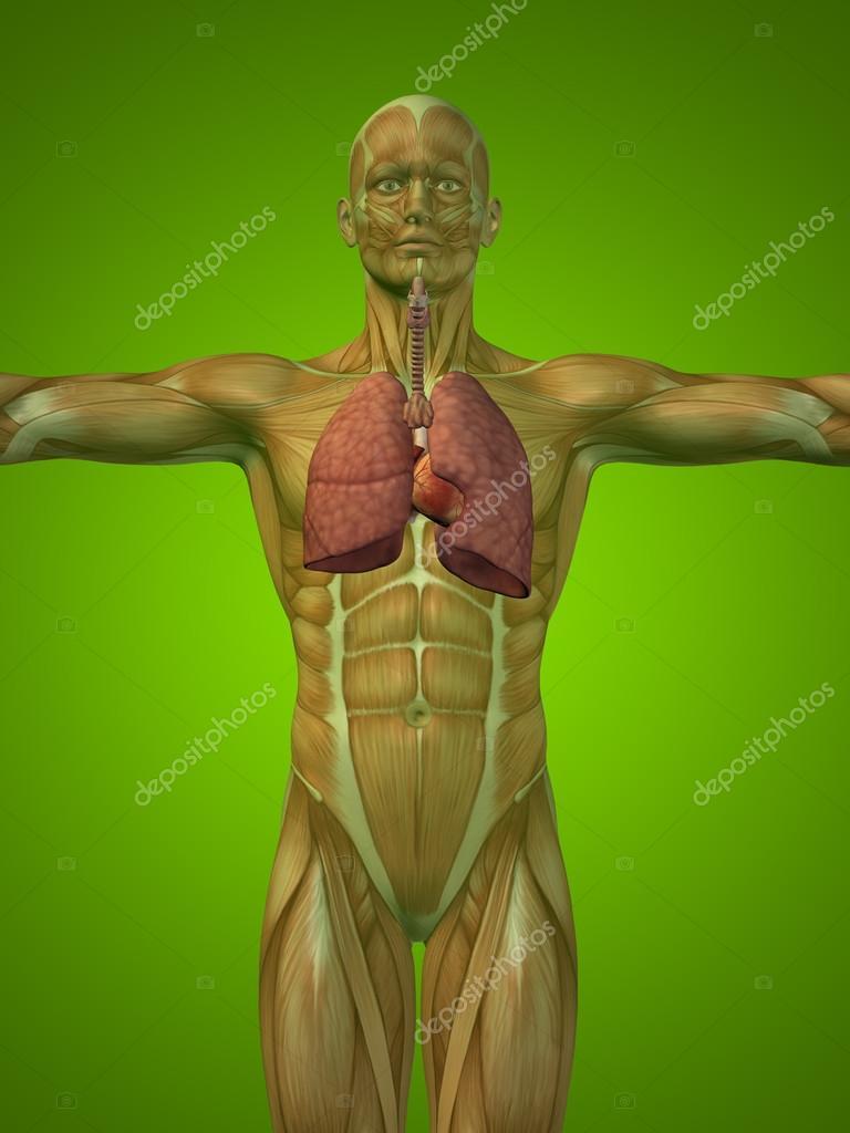 Konzept oder konzeptionelle anatomische Mensch oder Mensch 3d ...