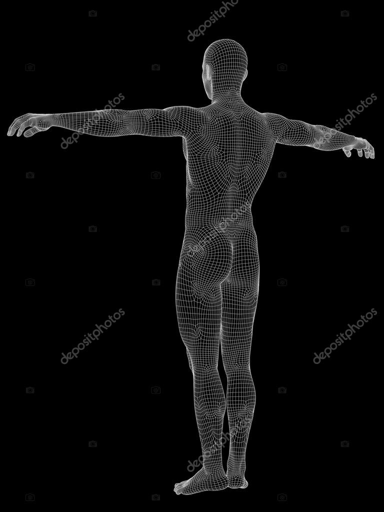 Male Anatomy Made Of White Wireframe Stock Photo Design36 100540006