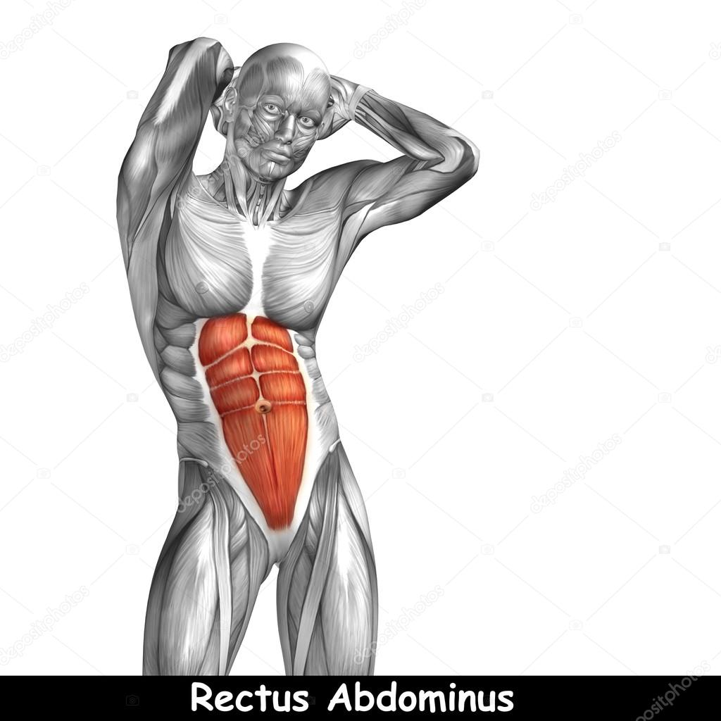 Menschliche Anatomie der Brust — Stockfoto © design36 #100542450