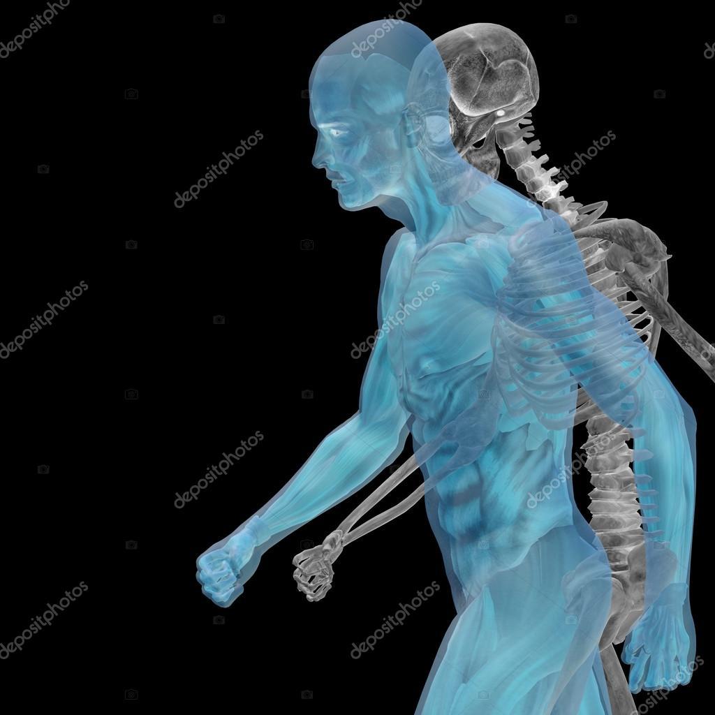 Menschliche Anatomie mit Knochen — Stockfoto © design36 #103613302