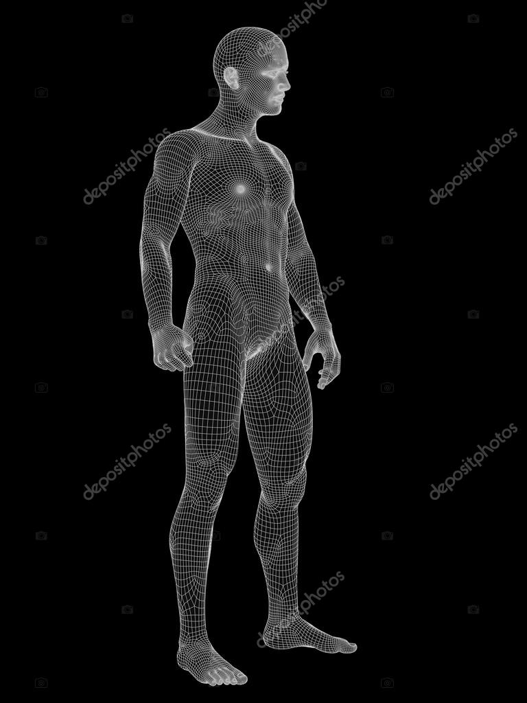 male anatomy made of white wireframe — Stock Photo © design36 #103617004