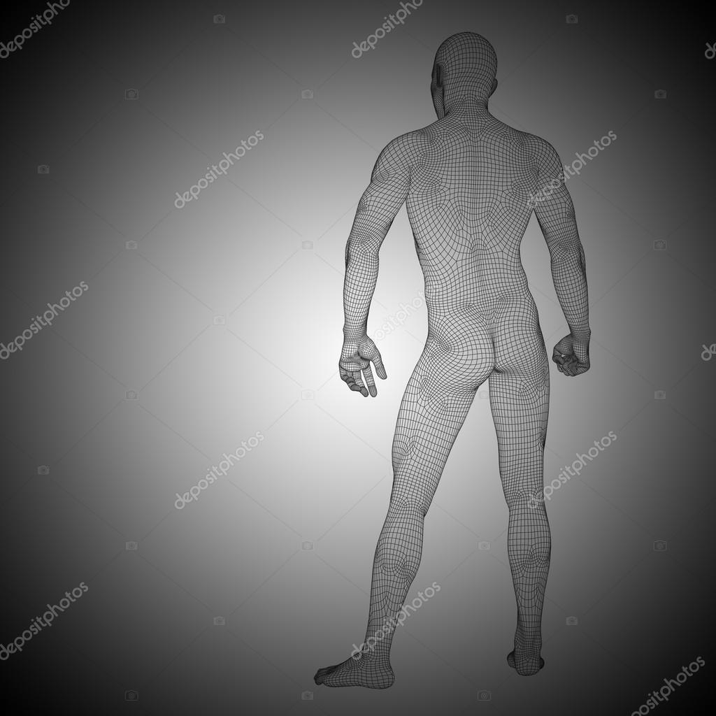Drahtmodell männlichen Anatomie — Stockfoto © design36 #103619132