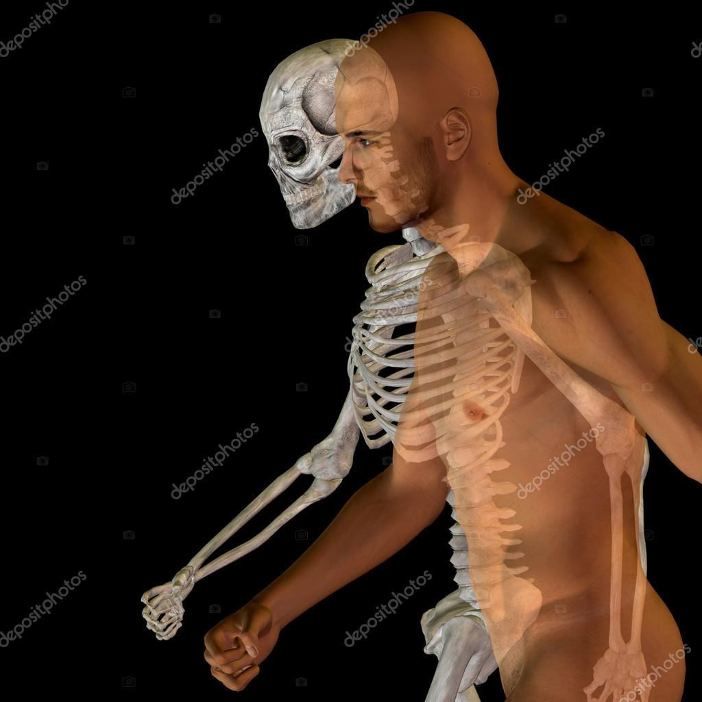 Menschliche Anatomie mit Knochen — Stockfoto © design36 #103621696